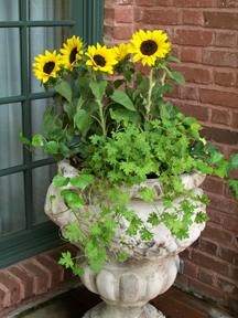 Sunflower Container