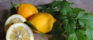 lemon flavors, lemon balm, herbs in the kitchen