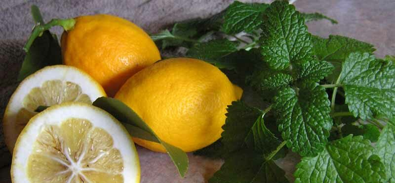 lemon flavors, lemon balm, herbs in the kitchen