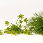 Add Dill to Your Fall Garden